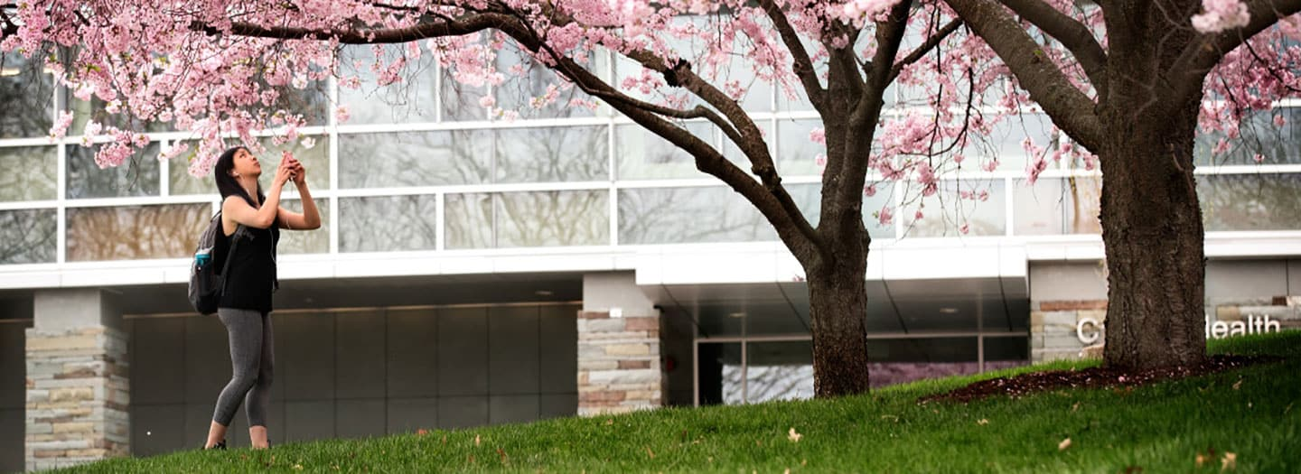Student photographing cherry blossoms